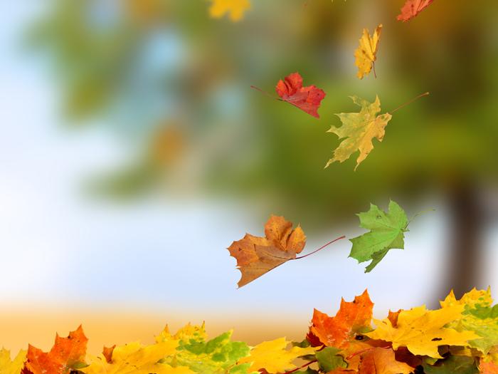 今から予習! 美肌を取り戻す「秋」のスキンケア