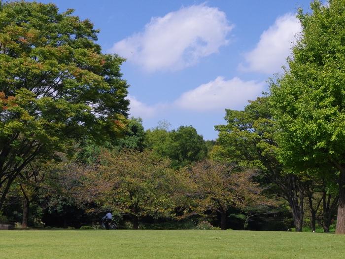 【イベントレポート】初めてのウォーキング ~都心の「北の丸公園」で森林浴~