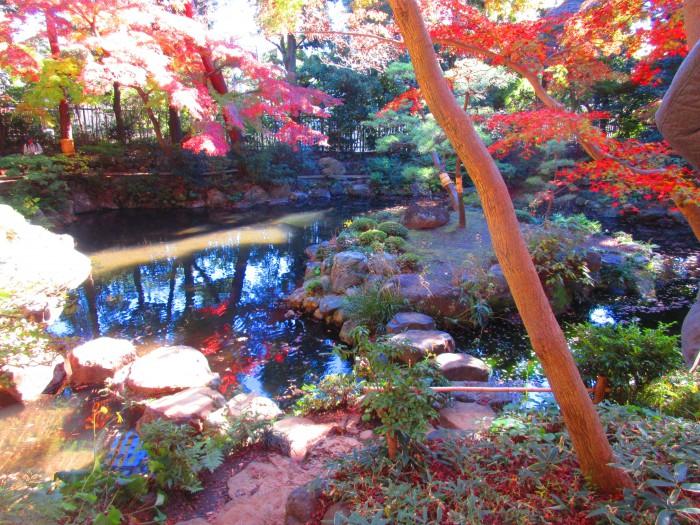 【イベントレポート】自分を幸福にするための手相教室~殿ヶ谷戸庭園で紅葉を眺めながら自分を見つめる~