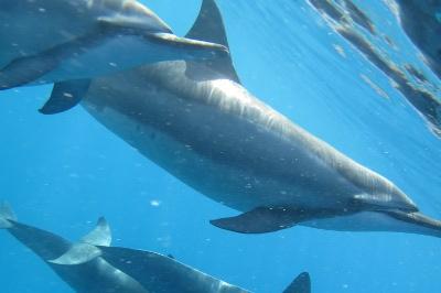 ドルフィンツアーでイルカと一緒に泳ぐ!?
