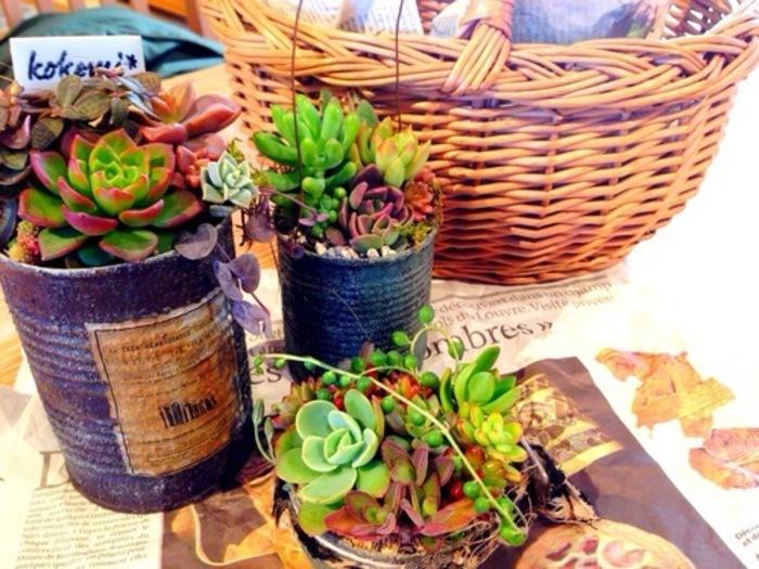 人気の多肉植物。育て方をマスターしてお部屋を飾ろう♪