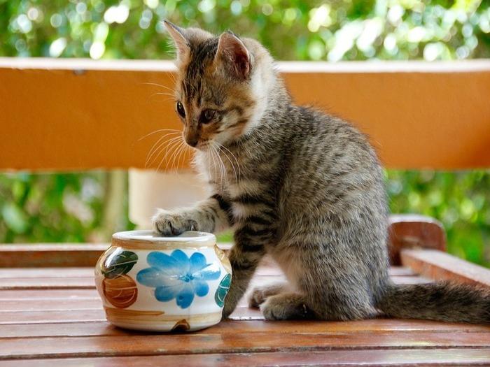 史上空前の猫ブーム到来!猫と触れ合うと健康にもいいらしい!