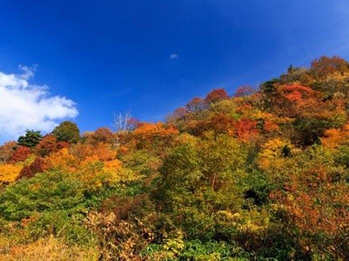 登山初心者でも大丈夫!ハイキングで紅葉を楽しもう♪